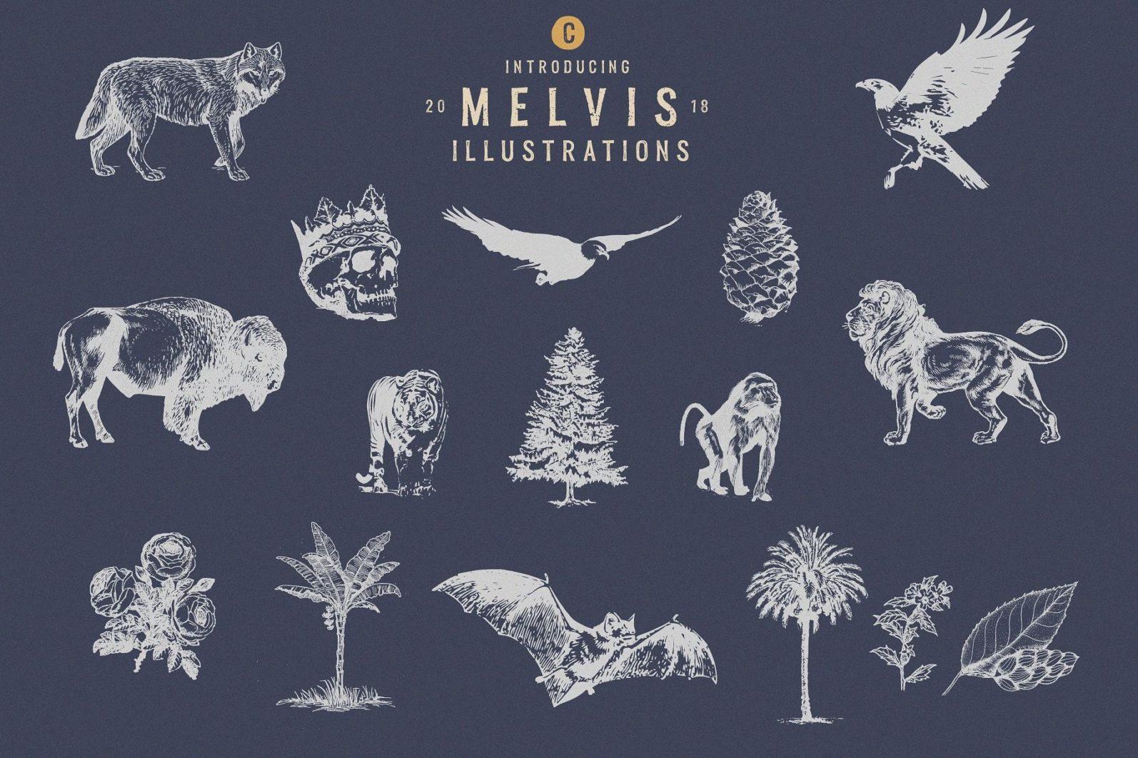 Melvis - Vintage Font Family+Extras - artboard 5 -