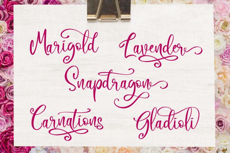 Camellia Script - Camellia 2 -