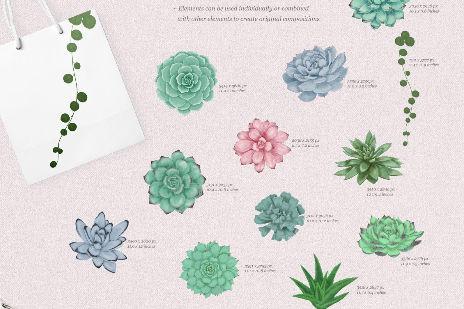 Sweet Succulents Design Set - sweet succulents elements -