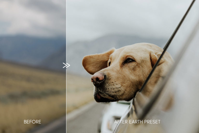 Moody Pet Photography Kit THE GREAT OUTDOORS Lightroom Presets for Desktop & Mobile - great outdoors pet presets 6 -