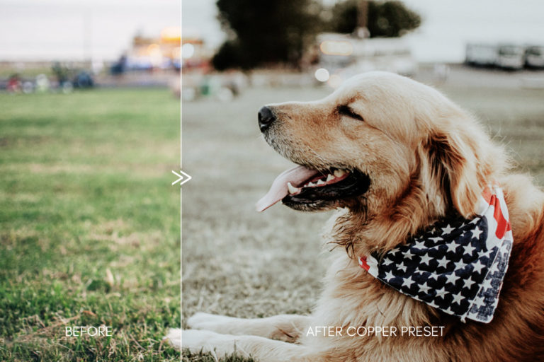 Moody Pet Photography Kit THE GREAT OUTDOORS Lightroom Presets for Desktop & Mobile - great outdoors pet presets 8 -