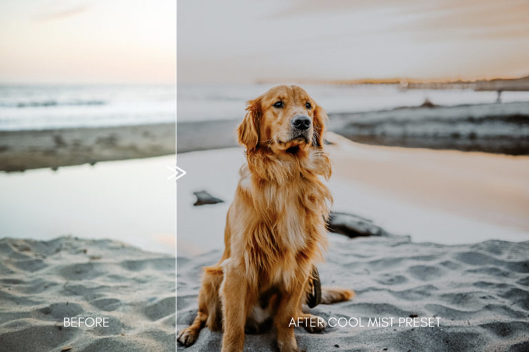 Moody Pet Photography Kit THE GREAT OUTDOORS Lightroom Presets for Desktop & Mobile - great outdoors pet presets 10 -