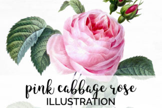 All Freebies - A01V01G 469 Pink Cabbage Rose A1 -