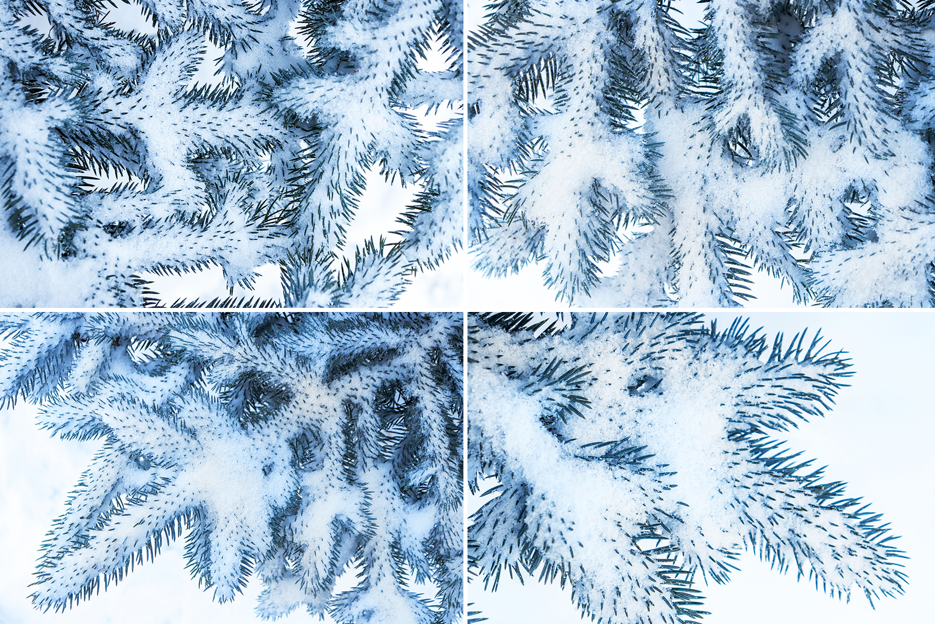 Christmas Textures.13 Blue Christmas Tree Background Textures