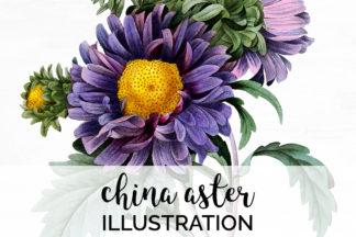 Crella Subscription - A01V01M 469 China Aster A1 -