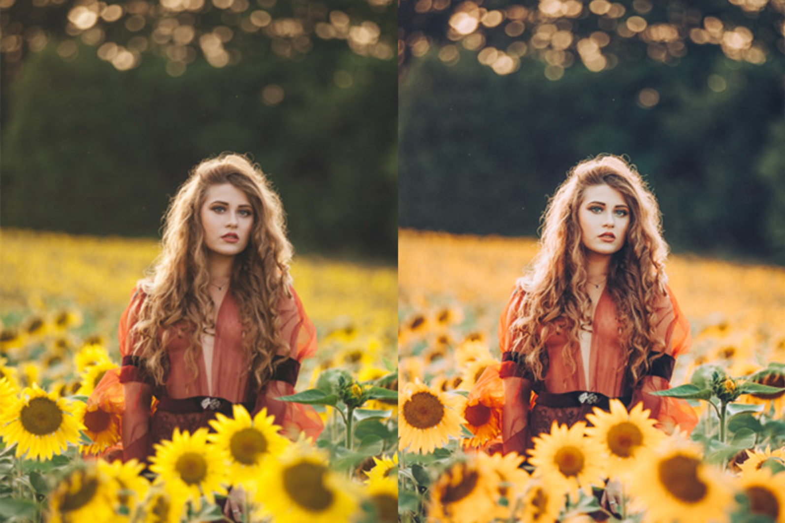 65 x Lightroom Presets (Mobile and Desktop Bundle) inspired by Spring - 12 Sunflower Fields -