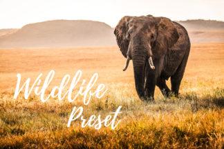 Desktop Lightroom Presets - CF Wildlife -
