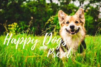 Desktop Lightroom Presets - CF Happy Dogs -