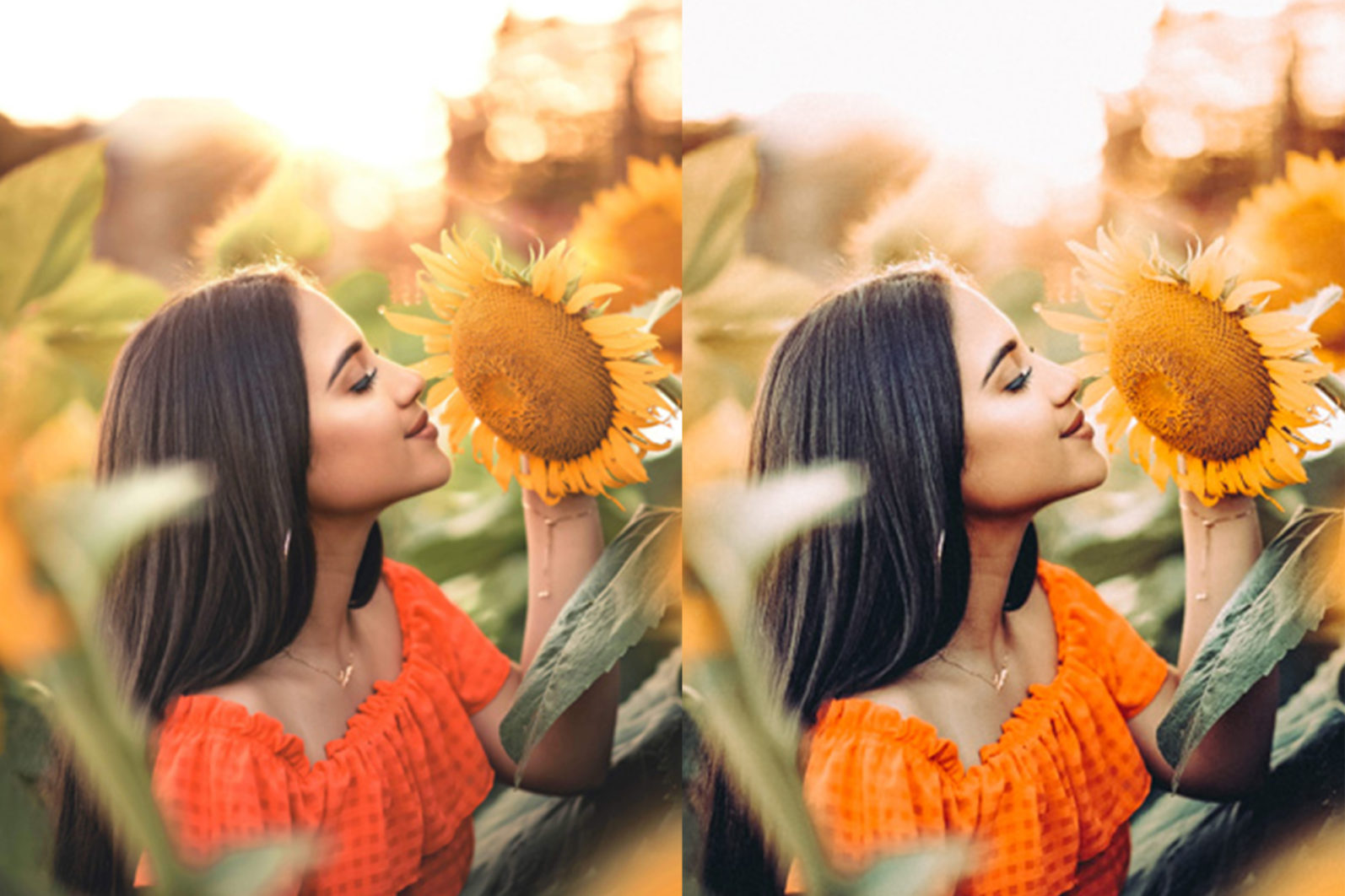 12 x Sunflower Fields Lightroom Presets   Warm Lightroom Presets   Yellow Presets - 3 Sunflower Fields -