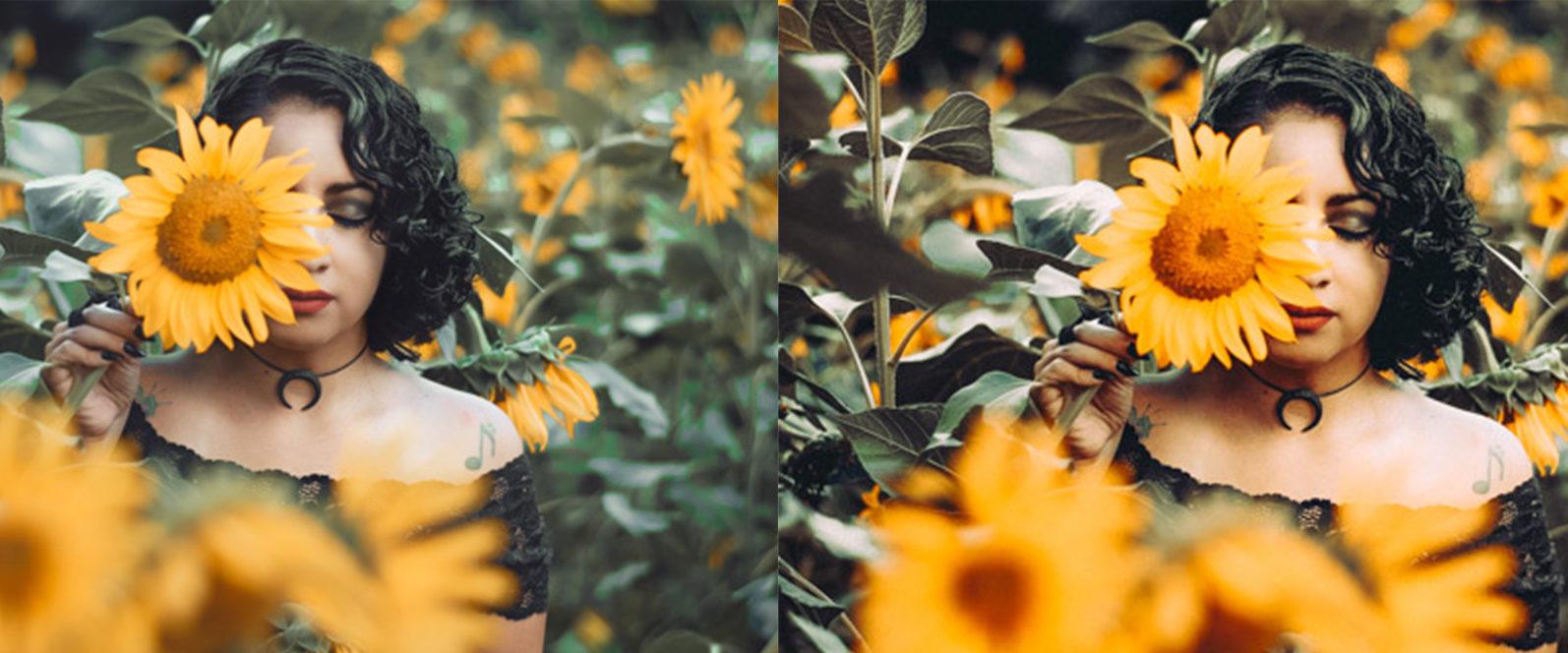 12 x Sunflower Fields Lightroom Presets   Warm Lightroom Presets   Yellow Presets - 6 Sunflower Fields -