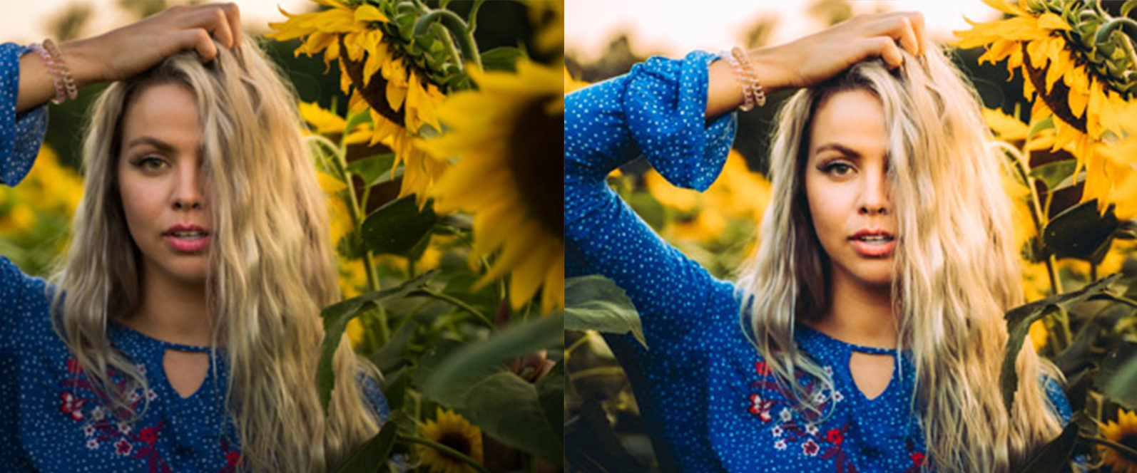 12 x Sunflower Fields Lightroom Presets   Warm Lightroom Presets   Yellow Presets - 8 Sunflower Fields -