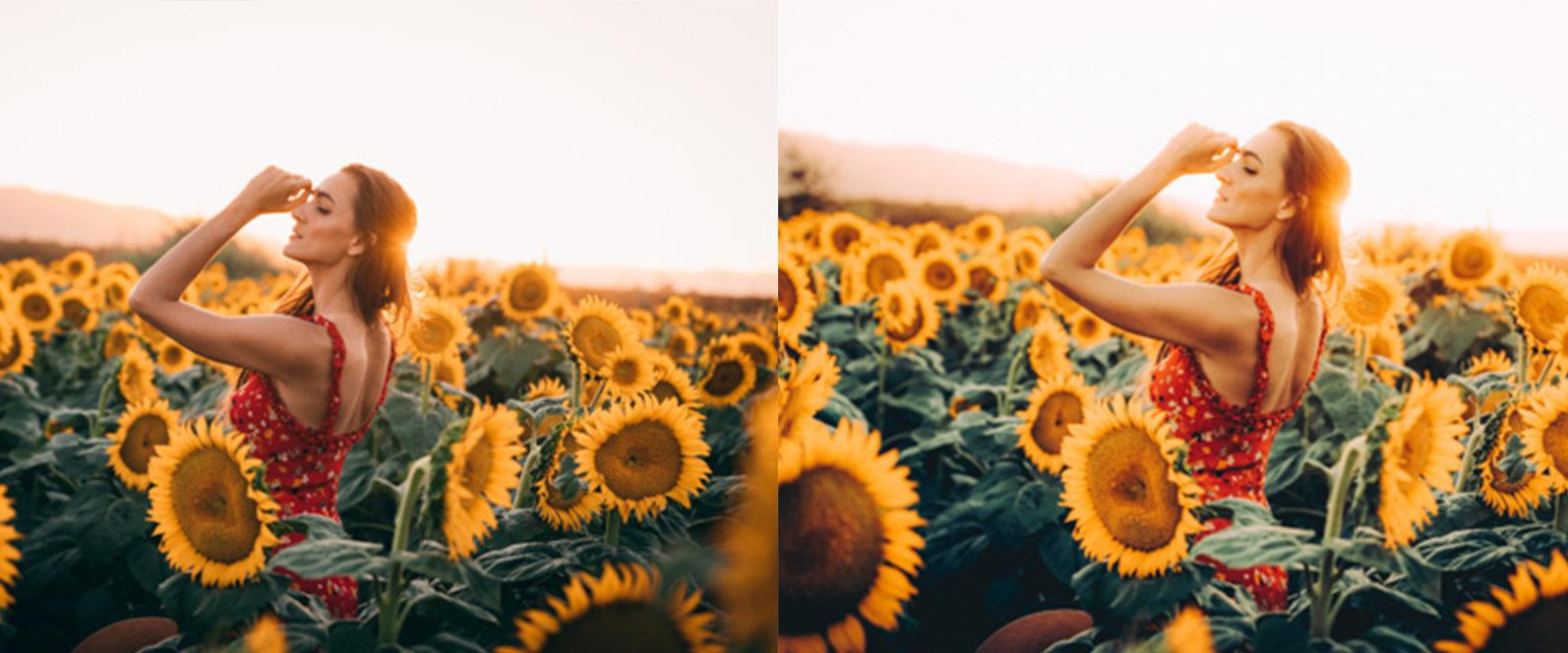 12 x Sunflower Fields Lightroom Presets   Warm Lightroom Presets   Yellow Presets - 11 Sunflower Fields -