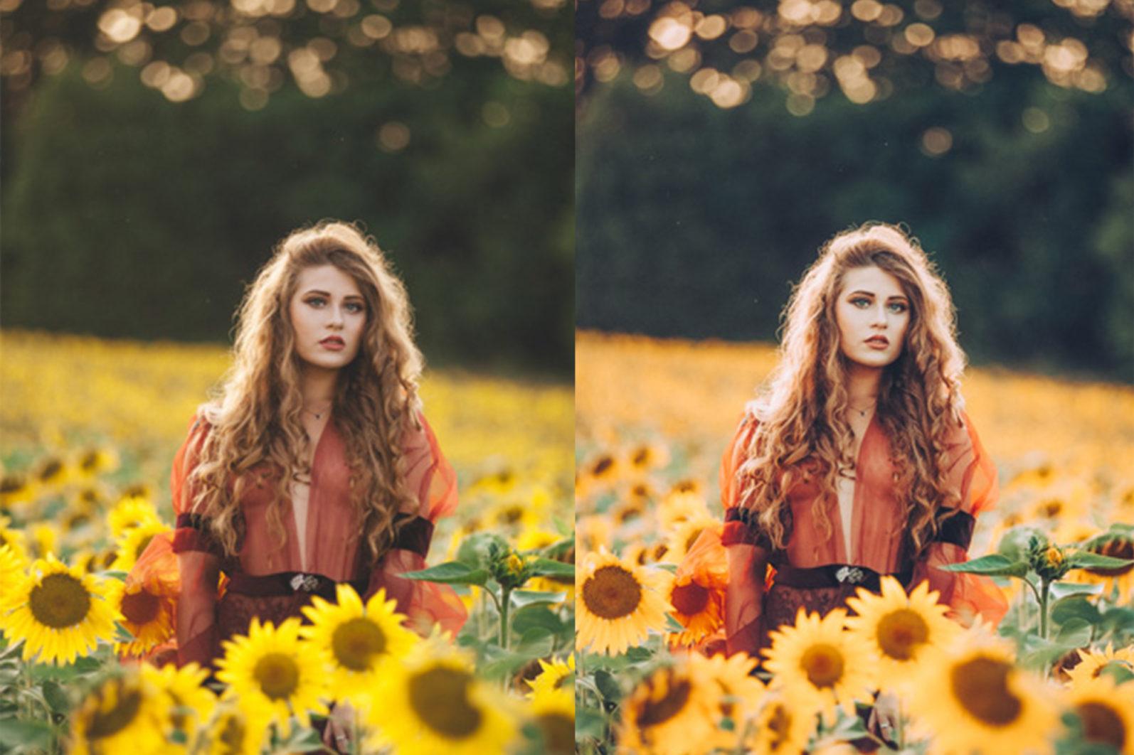 12 x Sunflower Fields Lightroom Presets   Warm Lightroom Presets   Yellow Presets - 12 Sunflower Fields -