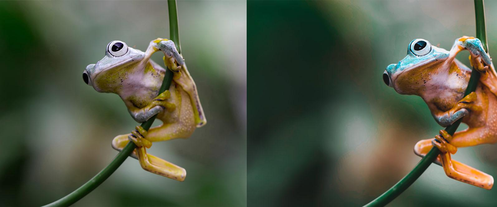 10 x Rain Forest Lightroom Presets | Green Lightroom Presets | Nature Presets - Rain Forest Preview 5 -