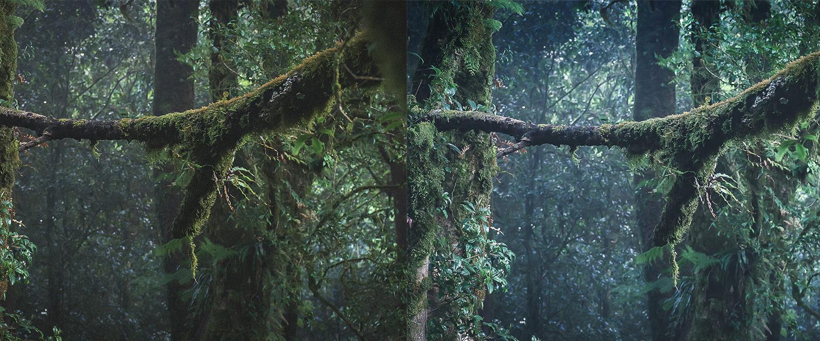 10 x Rain Forest Lightroom Presets | Green Lightroom Presets | Nature Presets - Rain Forest Preview 10 -