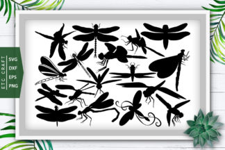 Bug Crella