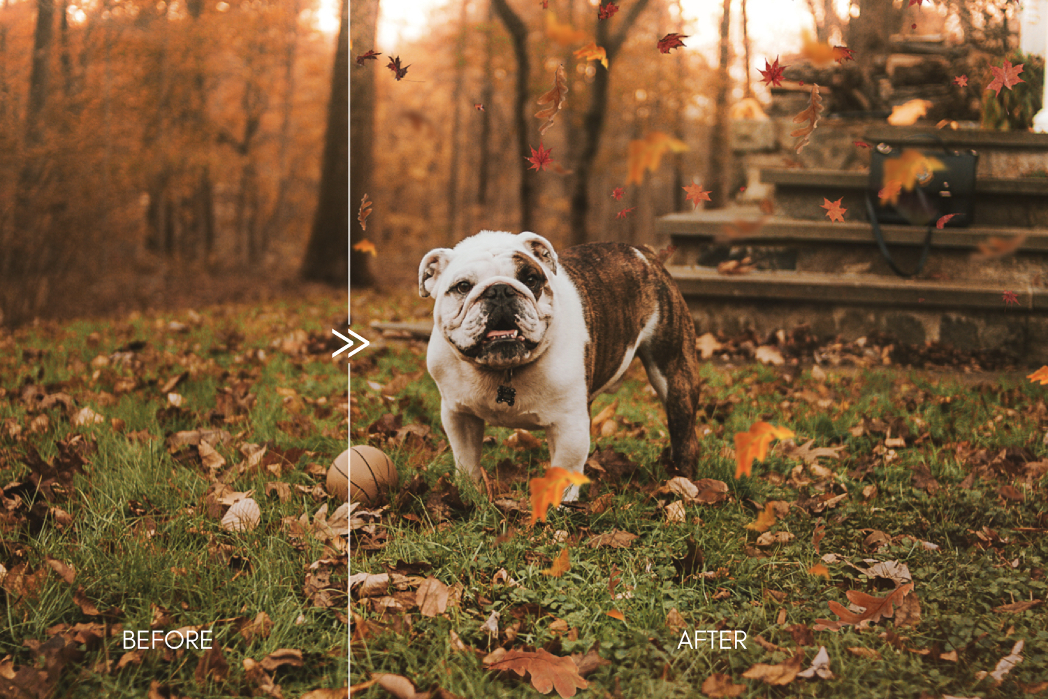 70 Natural Falling Autumn Leaves Photoshop Overlays - autumn falling leaves photoshop photography overlays 7 -