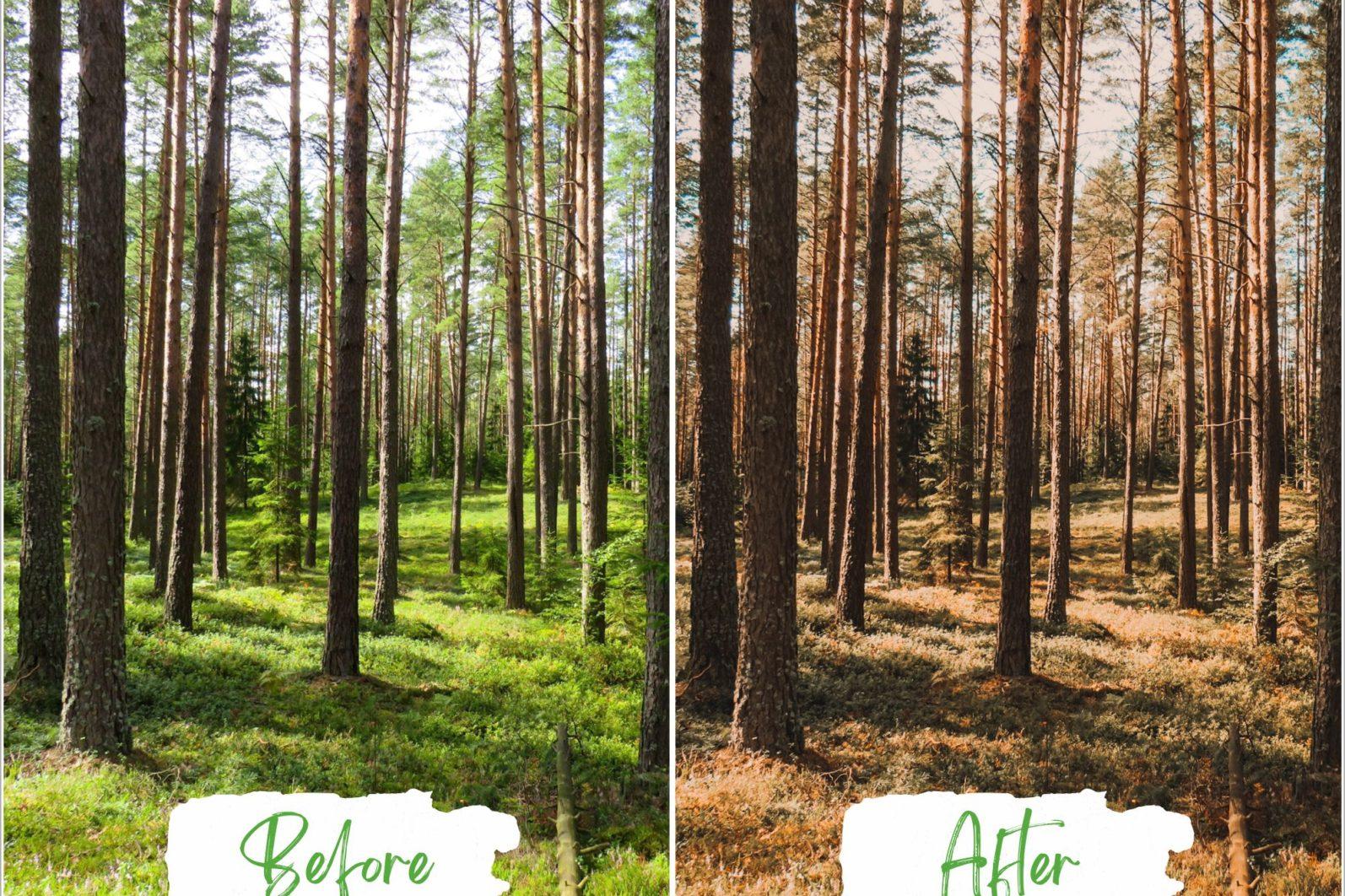 Treescape Lightroom Presets - Treescape Copy 4 -