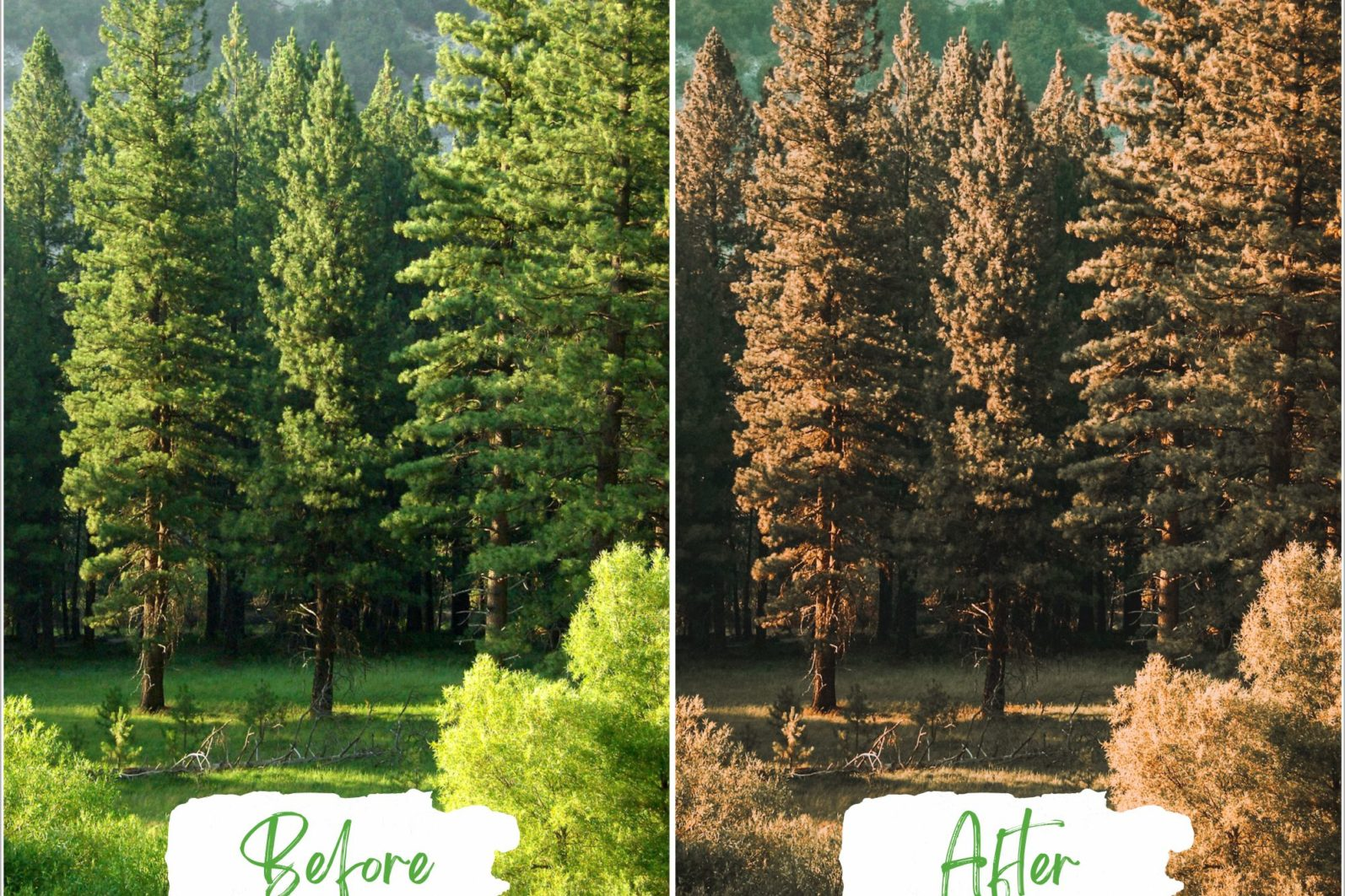 Treescape Lightroom Presets - Treescape Copy 6 -