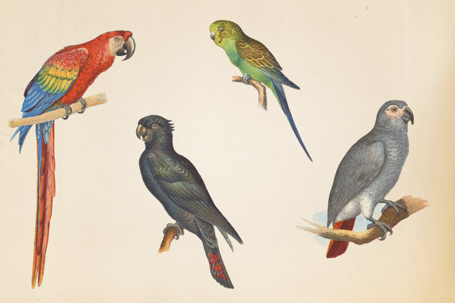Vintage Exotic Birds - mock 2 3 -