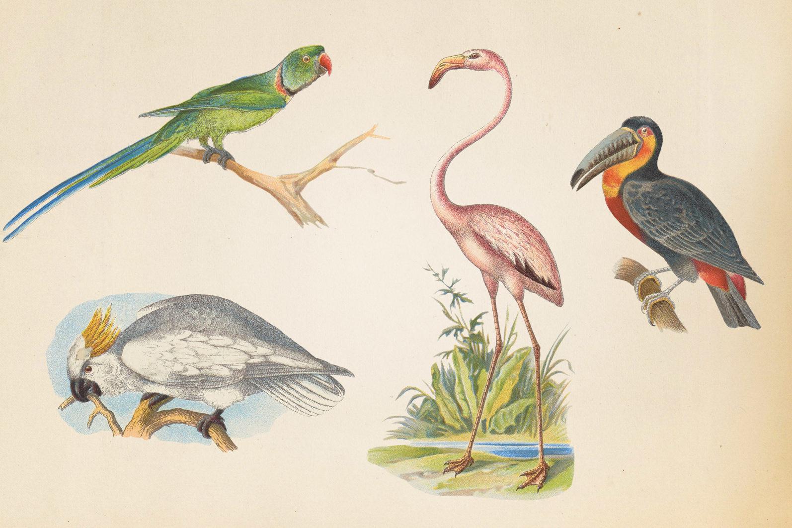 Vintage Exotic Birds - mock 3 3 -