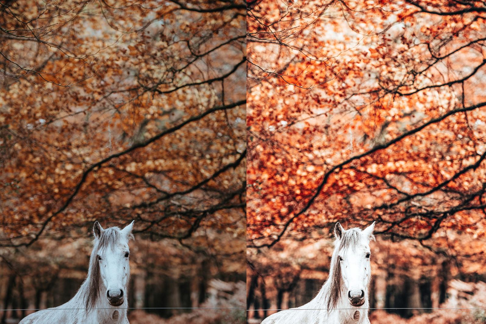 BUNDLE /// 08_Lightroom Collection // 71 x Desktop and Mobile Presets - 7 Autumn 1 -