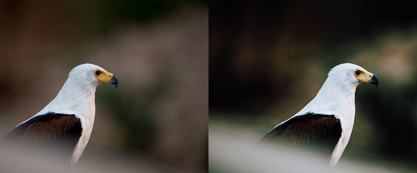 BUNDLE /// 281 x Lightroom Presets for Desktop // 24 Packs // Desktop and Mobile - 9 Birds 1 -