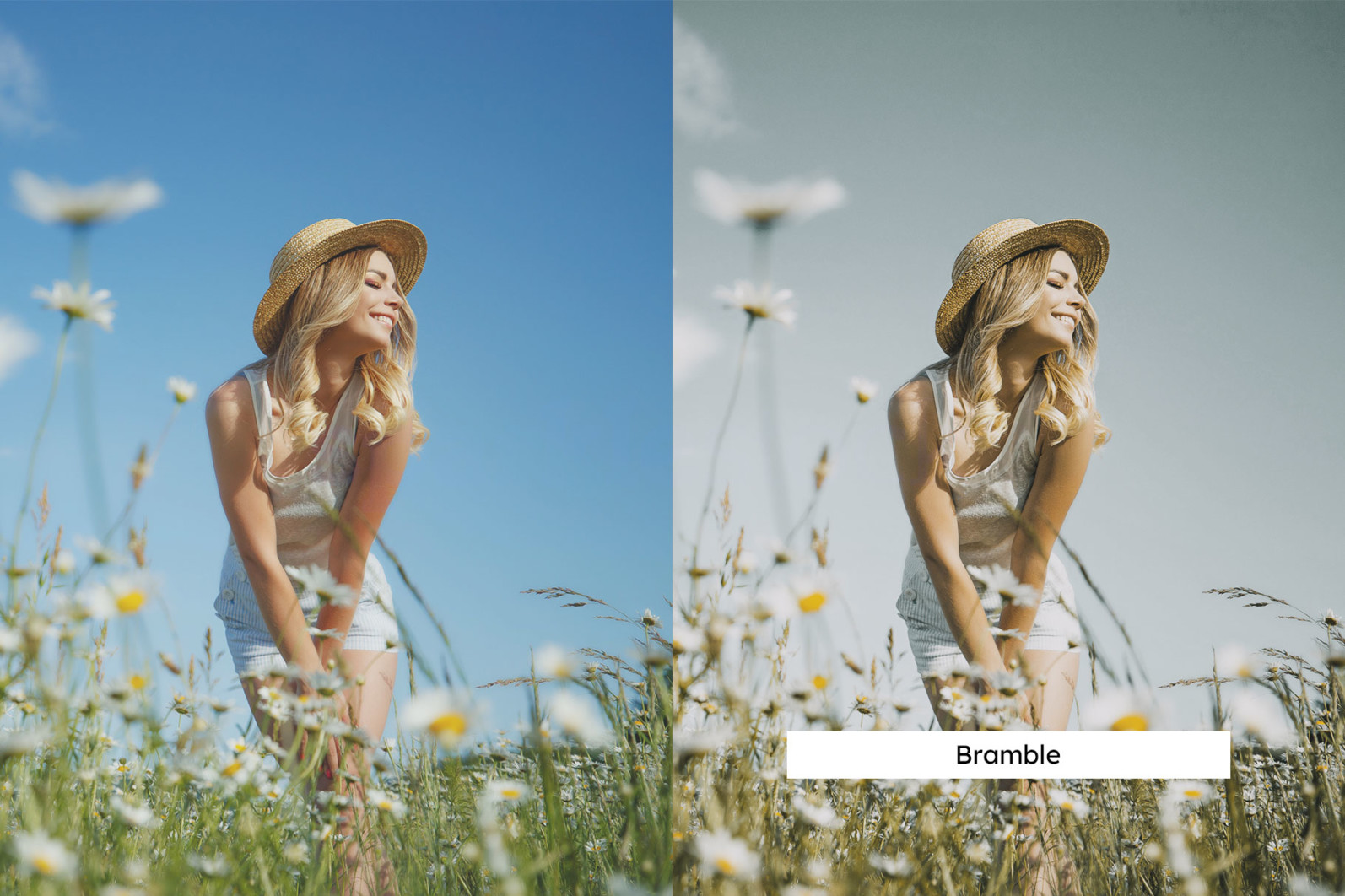 20 Chamomile Lightroom Presets and LUTs - 03 1 8 -