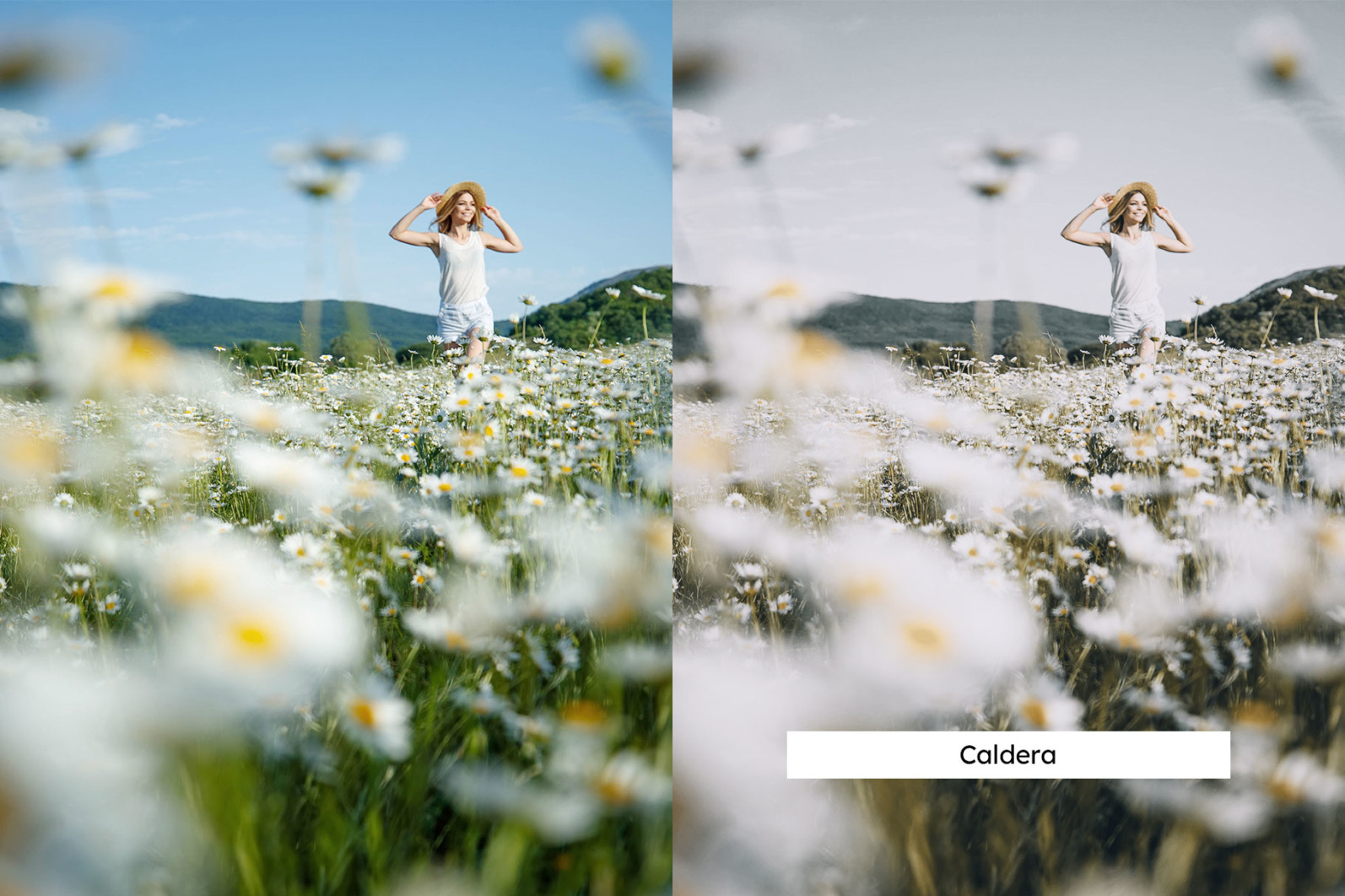 20 Chamomile Lightroom Presets and LUTs - 04 9 -