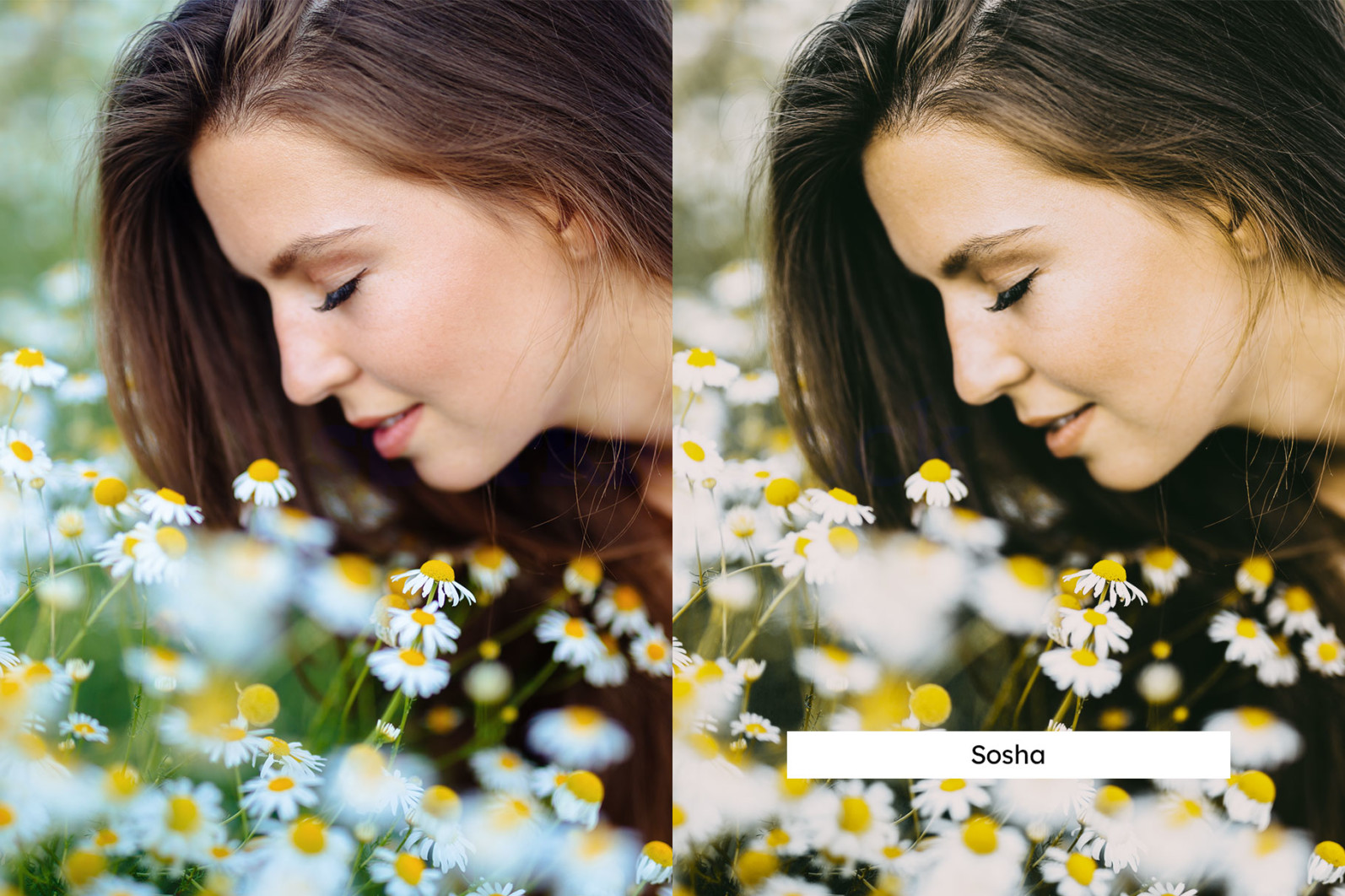 20 Chamomile Lightroom Presets and LUTs - 06 9 -