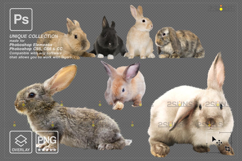 Digital Easter photoshop overlay & Easter bunny overlay: Easter overlay, Baby chicks overlay, Easter - 007 87 -