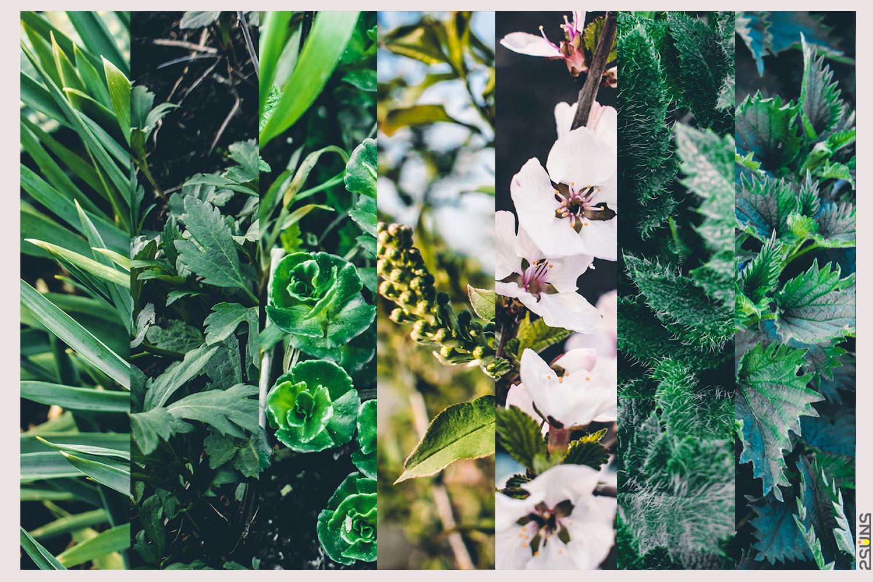 30 Floral backdrop & Fern overlay, Forest background, Flower overlay, Grass backdrop, Digital - 4 22 -