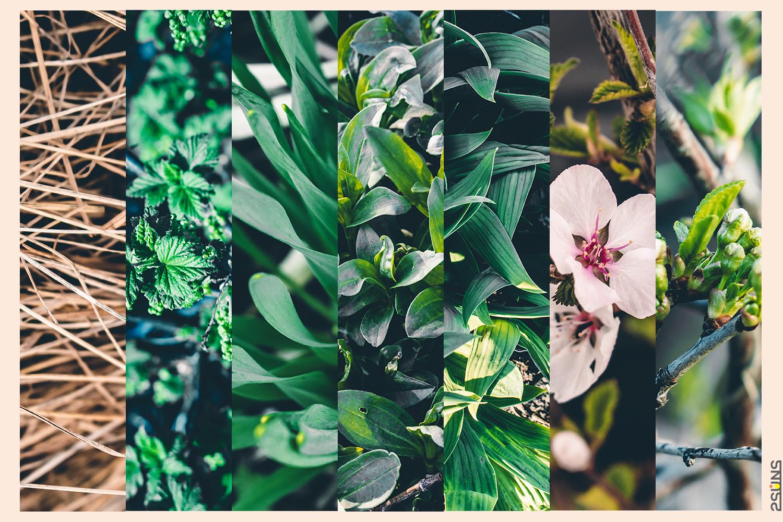 30 Floral backdrop & Fern overlay, Forest background, Flower overlay, Grass backdrop, Digital - 5 20 -