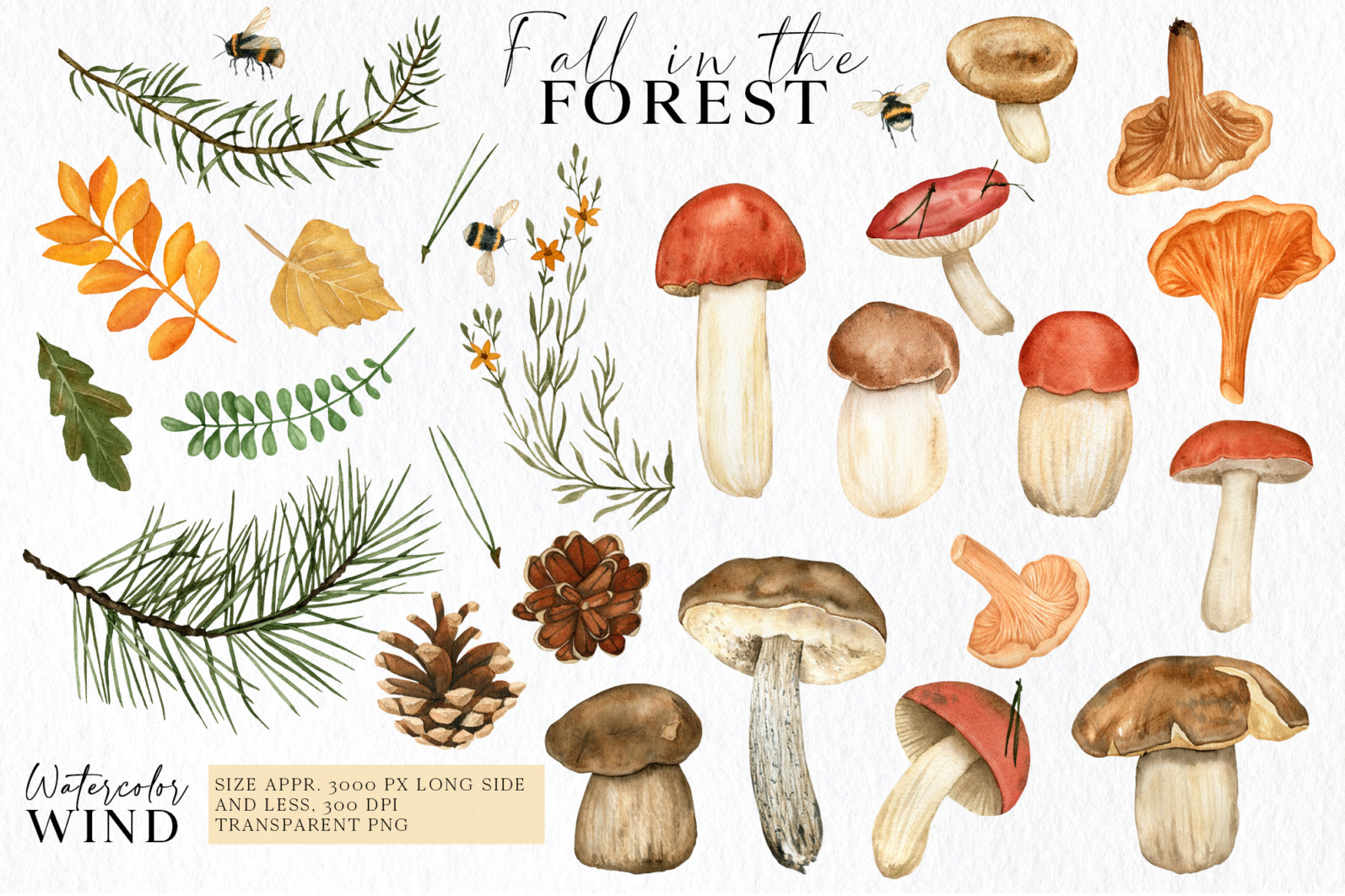 Fall forest mushrooms clipart, autumn clip art - 01 14 -