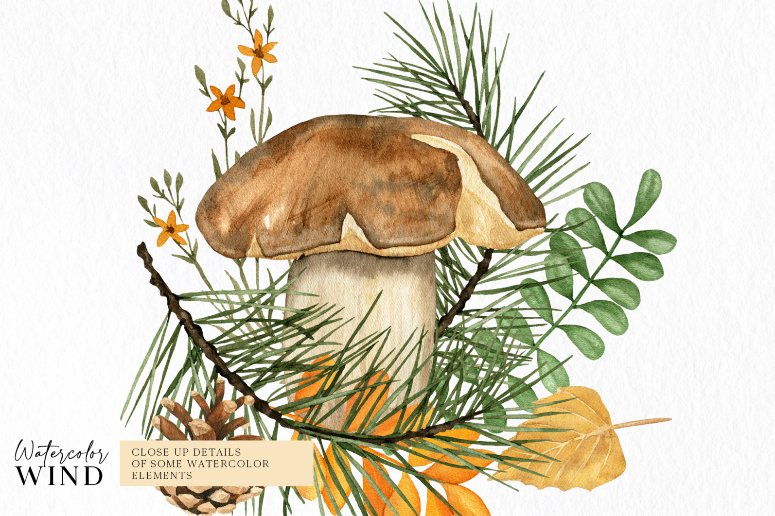 Fall forest mushrooms clipart, autumn clip art - 04 compos -